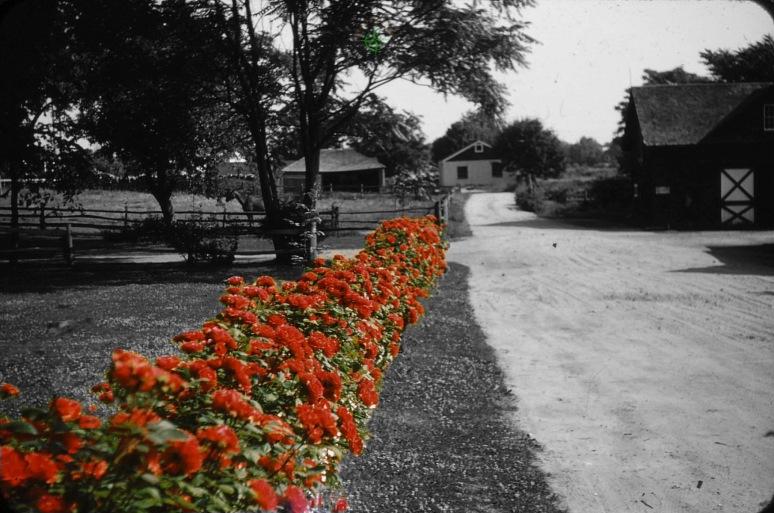 Percy's Roses
